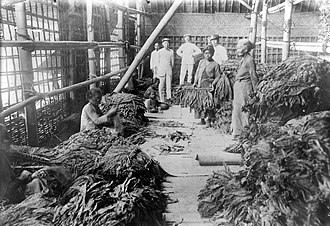 Cultivation System - Sorting tobacco leaves in Java during colonial period, in/before 1939.