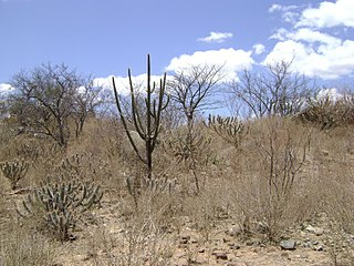 Caatinga Ecoregion (WWF)