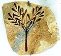 Caesalpina eocenica 322.JPG