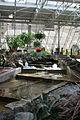 Calgary Devonian Gardens 12 (222078735).jpg