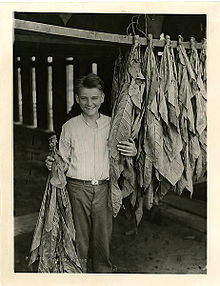 Calvin Coolidge, Jr. with hanging leaves.jpg