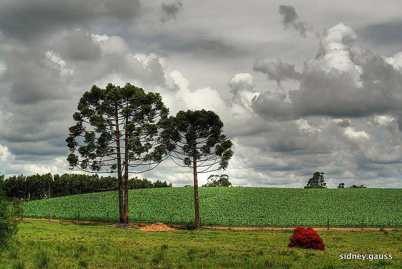 Campos perto de Curitiba