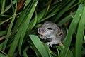 Capnerhurst Animal - Hagan Capnerhurst (39909469150).jpg