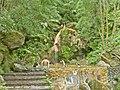 Cascata da Caldeira Velha - Ilha de São Miguel - Portugal (5397837672).jpg