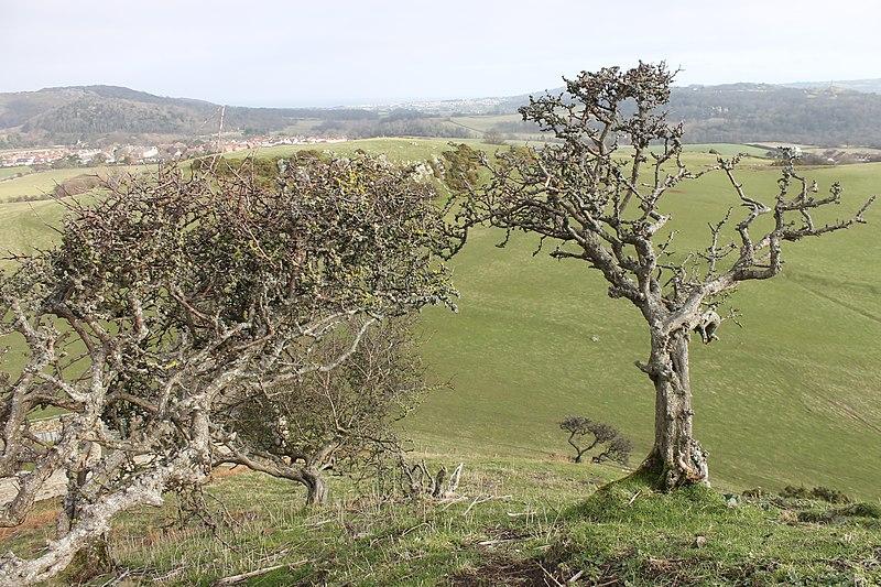 File:Castell Degannwy Deganwy Castle Sir Ddinbych Wales 36.JPG