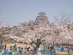 Personnes faisant un hanami aux pieds du Himeji-jô