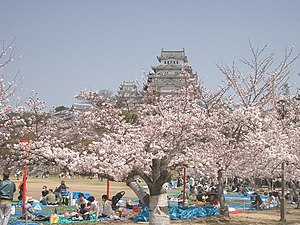 Hanami - Hanami picnics in the front of Himeji Castle, 2005