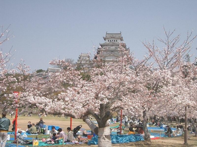 Castle Himeji sakura02
