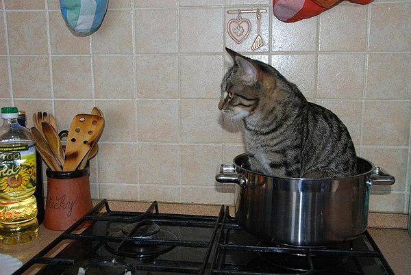 Cat in a pot.jpg