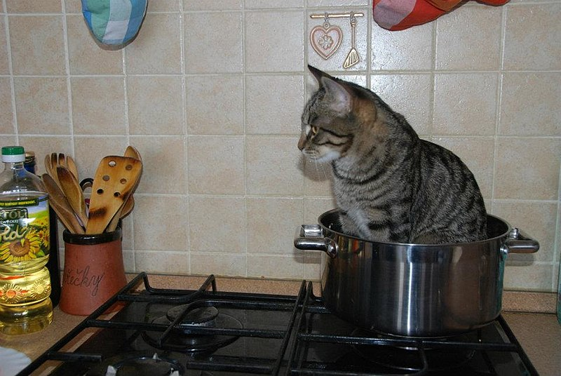 File:Cat in a pot.jpg