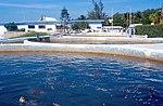 Cayman Islands Turtle Farm (3888110791).jpg