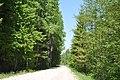 Ceļš, Olaines pagasts, Olaines novads, Latvia - panoramio (1).jpg
