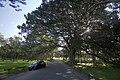 Centennial Park NSW 2021, Australia - panoramio (11).jpg