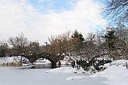 Central Park New York January 2016 002.jpg
