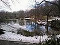 Central Park south .jpg
