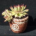 Ceramic, bowl.jpg