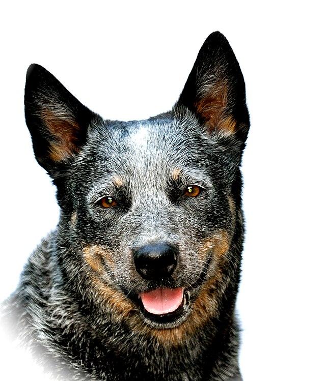 Exterier Psa Wikiwand