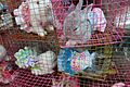Chatuchak bunnies (5323040128).jpg