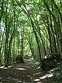 Chemin des champs Allières 2.jpg