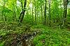 Chequamegon Hardwoods.jpg