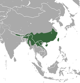 Chinese Pangolin area.png