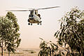 Chinook in North African Exercise MOD 45150871.jpg