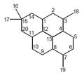 Cicloanfilectano - Numeración.png