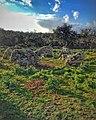 Circolo megalitico di Noddule.jpg