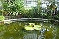 Cluj-Napoca Botanical Garden kz08.jpg