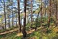 Coastal forest.JPG