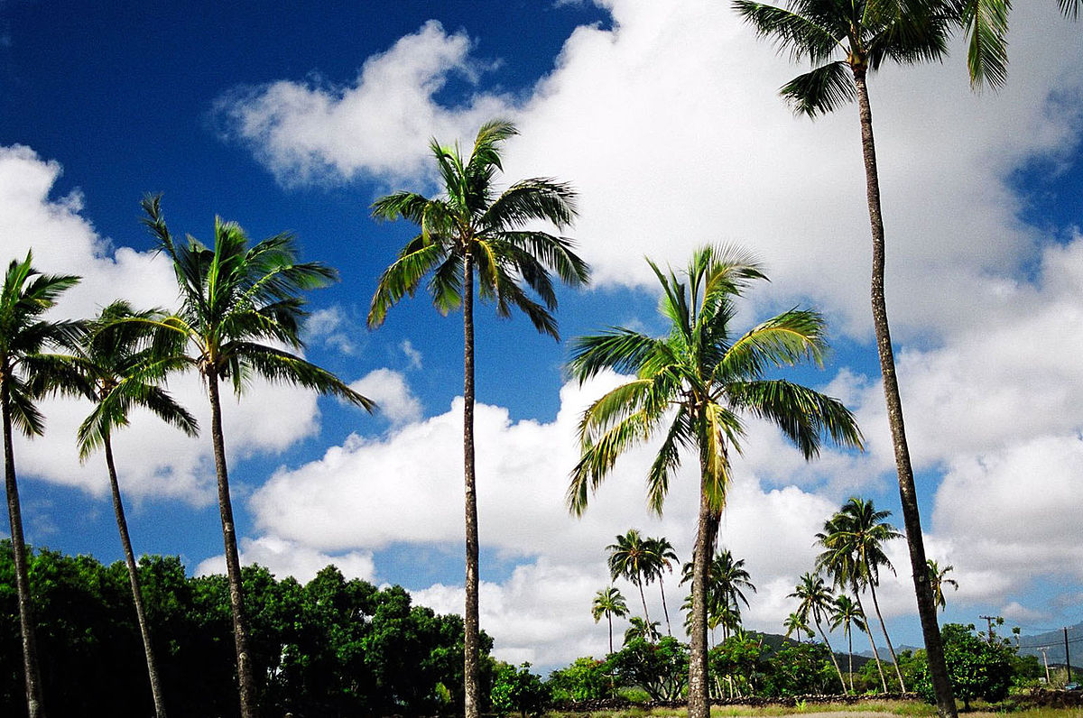 What Is The Nickname For The Island Of Hawaii