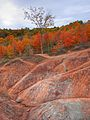 Colour in the Badlands (4006657932).jpg