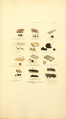 Coloured Figures of English Fungi or Mushrooms - t. 372.png
