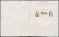 Coluber buccatus - 1837 - Print - Iconographia Zoologica - Special Collections University of Amsterdam - UBA01 IZ12000181.tif
