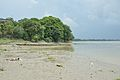 Confluence - River Saraswati and River Hooghly - Sankrail - Howrah - 2013-08-11 1409.JPG