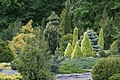 Conifers in Minsk botanical garden 10.jpg