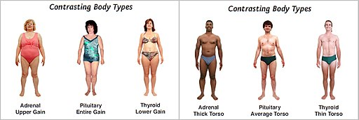 Contrasting body types