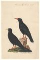 Coracias graculus - 1840 - Print - Iconographia Zoologica - Special Collections University of Amsterdam - UBA01 IZA1000568.tif