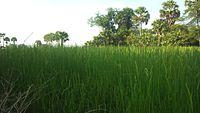 Countryside of Cambodia.jpg