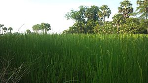 Countryside of Cambodia.jpg