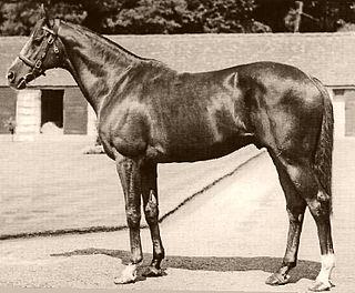 Vain (horse) Australian-bred Thoroughbred racehorse