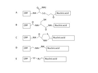 Cell-penetrating peptide - Covalent linkage between CPP and nucleic acid