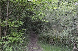 Cuckoo Wood
