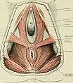 Cunningham's Text-book of anatomy (1914) (20823377041).jpg
