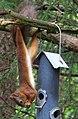 Däggdjur Mammals (23379279056).jpg