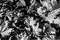 Dülmen, Wildpark -- 2020 -- 3419 (bw).jpg