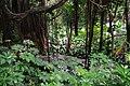 Džungla - panoramio.jpg