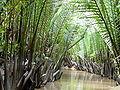 Dừa nước.jpg