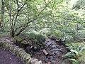 DSCN6217 Helensburgh Duchess Wood.jpg