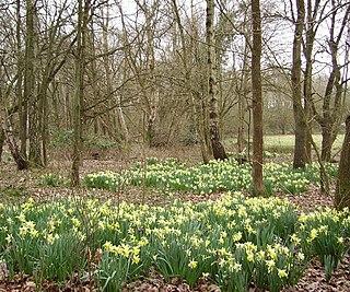 Sandhurst, Berkshire town in Berkshire, England
